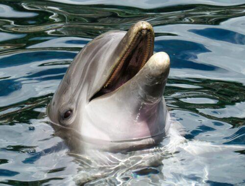 Seaquarium-Dolphin photo